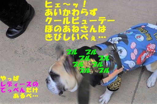 DSC_0010_2018030115245167e.jpg
