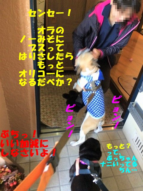 IMG_9048_20180305135944221.jpg