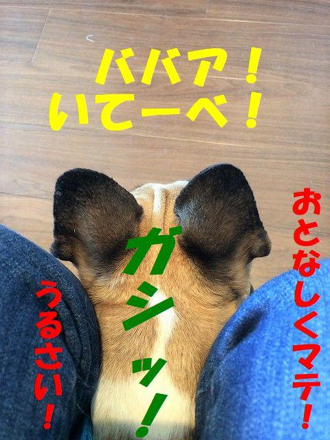 IMG_9422.jpg