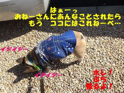 IMG_9439.jpg