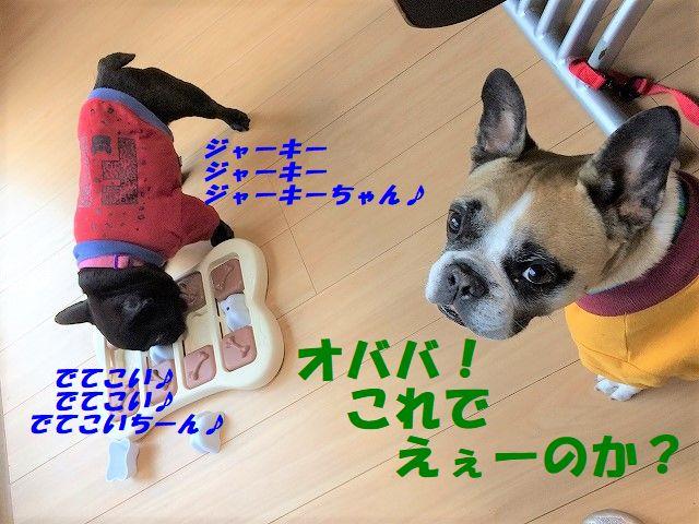 IMG_9519.jpg
