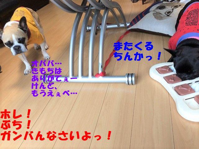 IMG_9531.jpg