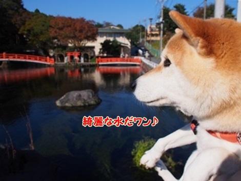 綺麗な水♪