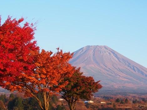 夕暮れ紅葉富士山