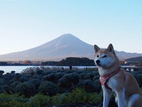 富士山とさくら