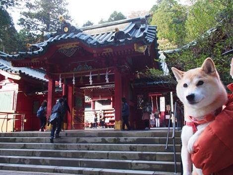 箱根神社に来たよ~
