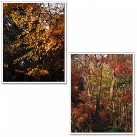 糺の森紅葉