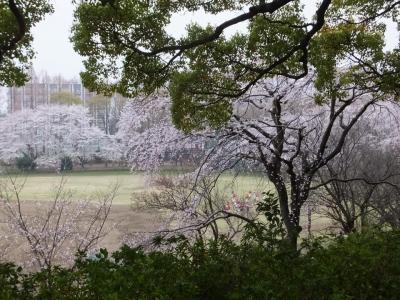 桜満開のキャンパス