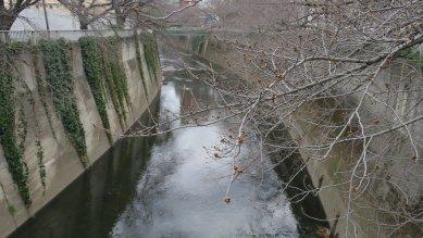 面影橋から神田川を
