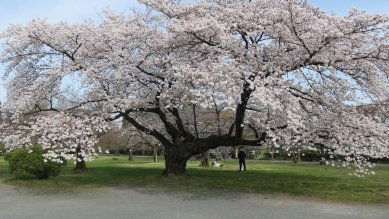 ○小石川植物園2