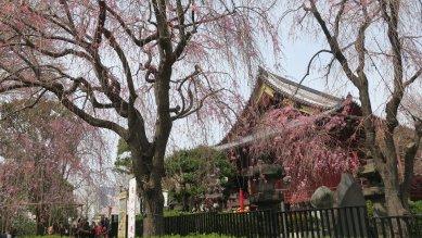 △清水堂と秋色桜