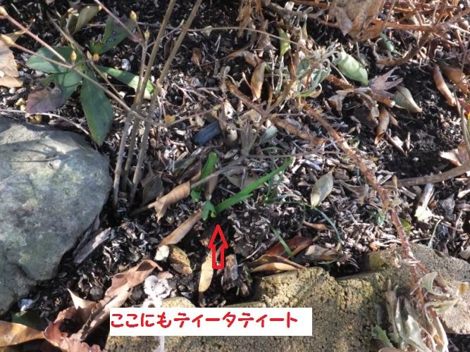 DSCF7899_1.jpg