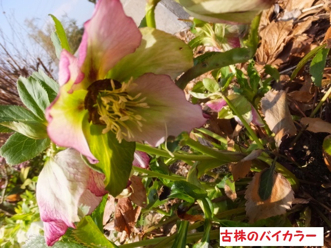 DSCF7973_1.jpg