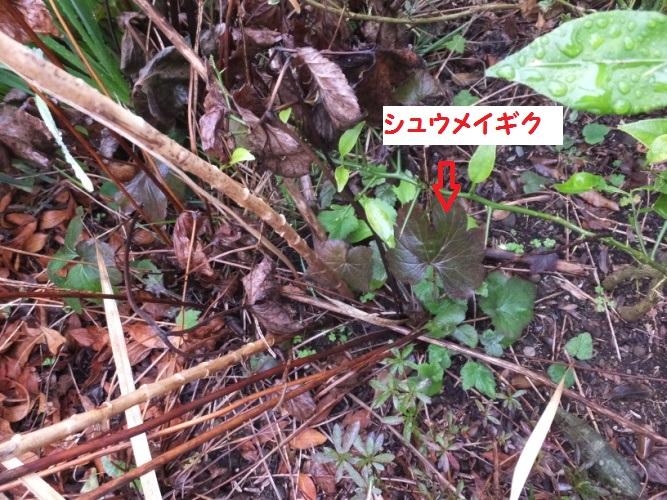 DSCF8037_1_20180306093613a46.jpg