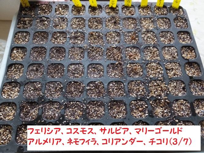 DSCF8075_1.jpg
