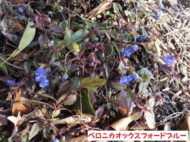 DSCF8169_1.jpg