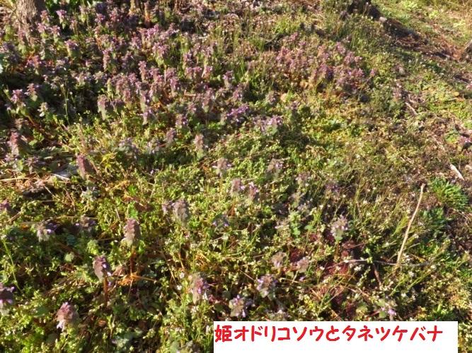 DSCF8176_1.jpg