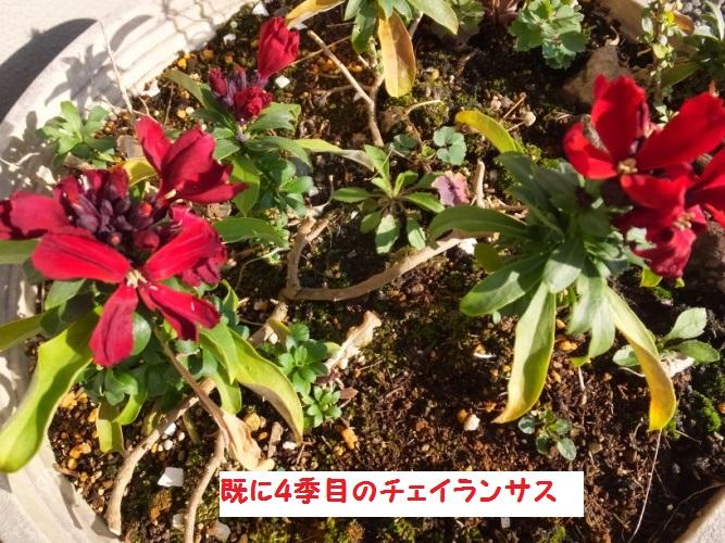 DSCF8182_1.jpg