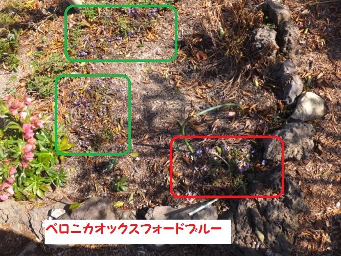 DSCF8219_1.jpg