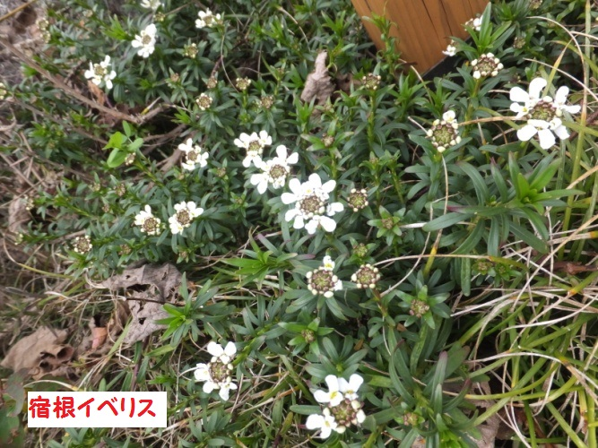 DSCF8239_1.jpg