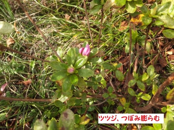 DSCF8256_1.jpg