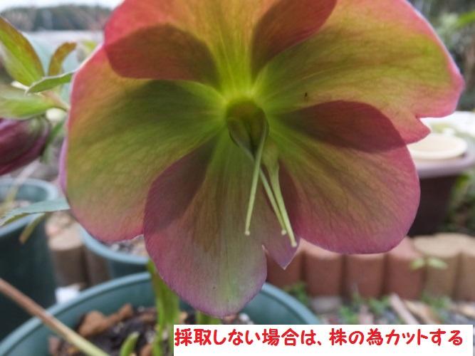 DSCF8304_1.jpg