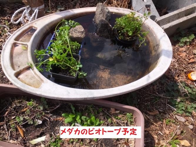 DSCF8346_1.jpg