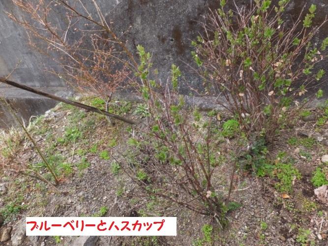 DSCF8368_1.jpg