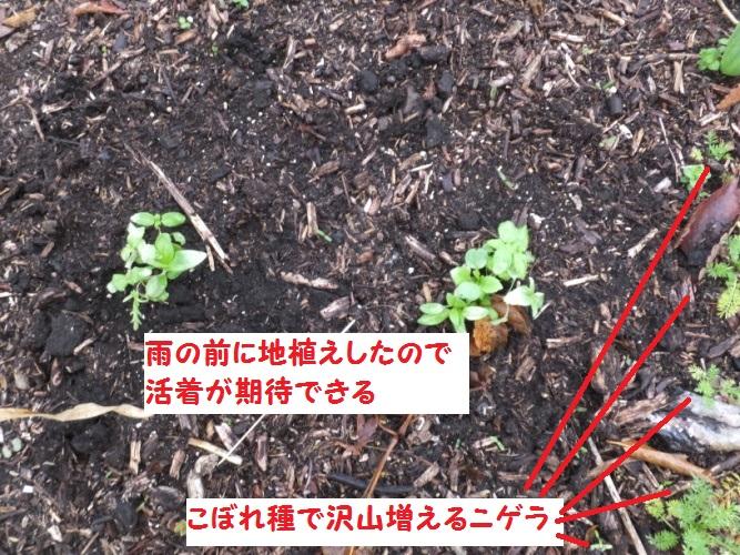 DSCF8400_1_20180320143219b6d.jpg