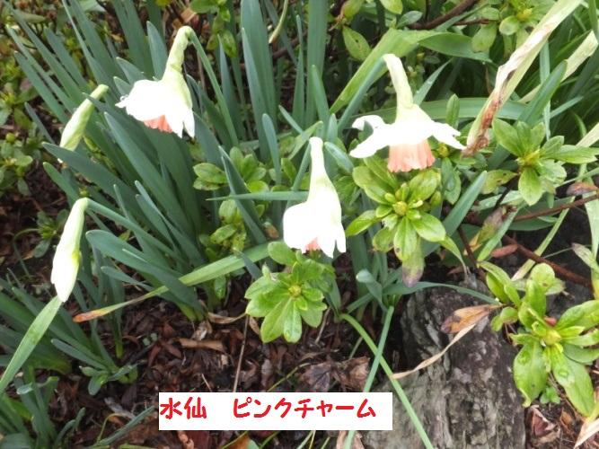 DSCF8419_1_201803211011483c9.jpg