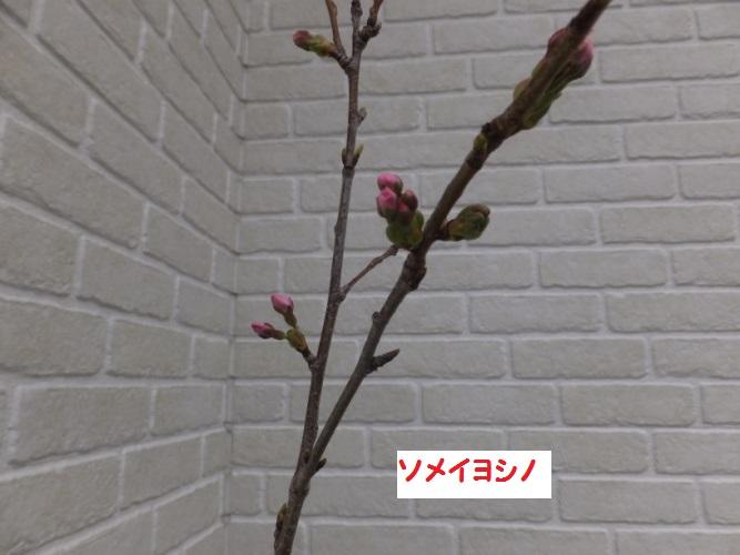 DSCF8422_1.jpg