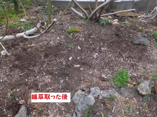 DSCF8589_1.jpg