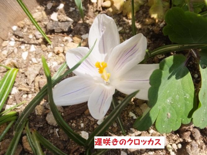 DSCF8618_1.jpg