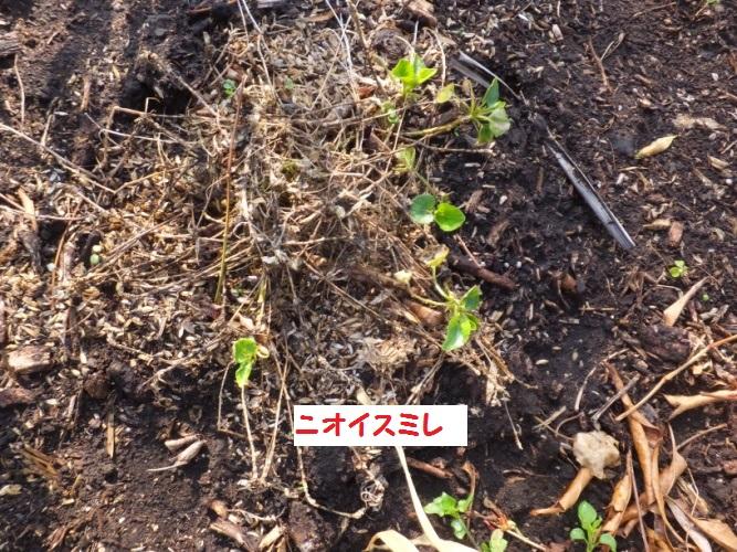 DSCF8758_1.jpg