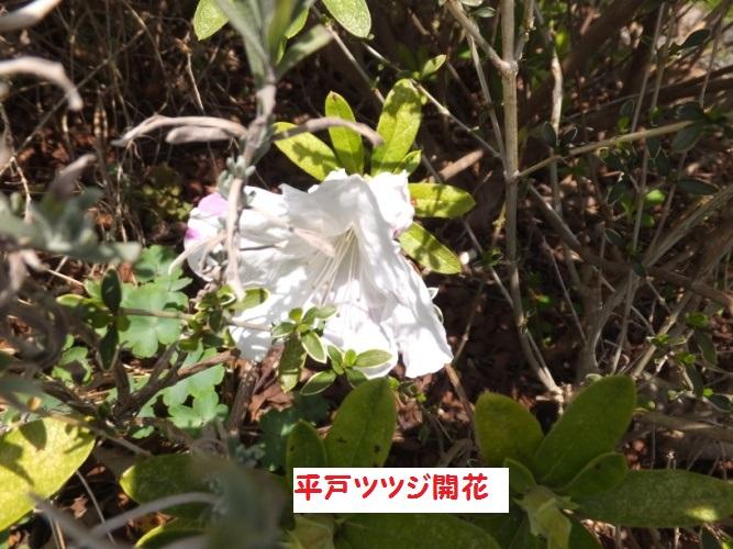 DSCF8770_1.jpg