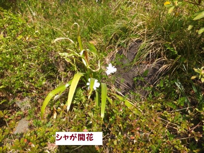 DSCF8849_1.jpg