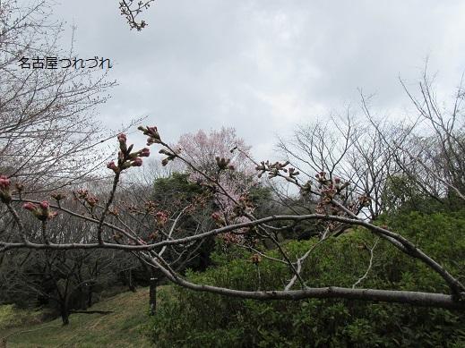 3・22緑地桜