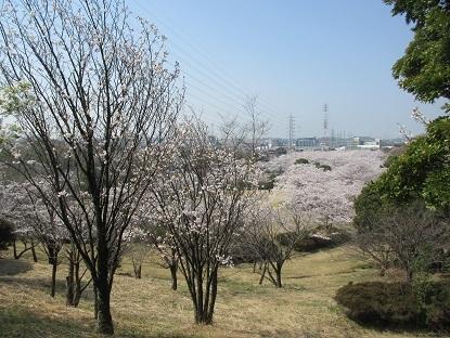 3・28桜の園2