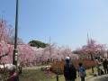 3・29鶴舞公園2