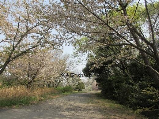 4・2名残りの桜