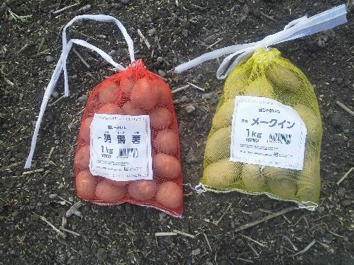 種芋です。