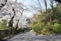 桜のジュータン30