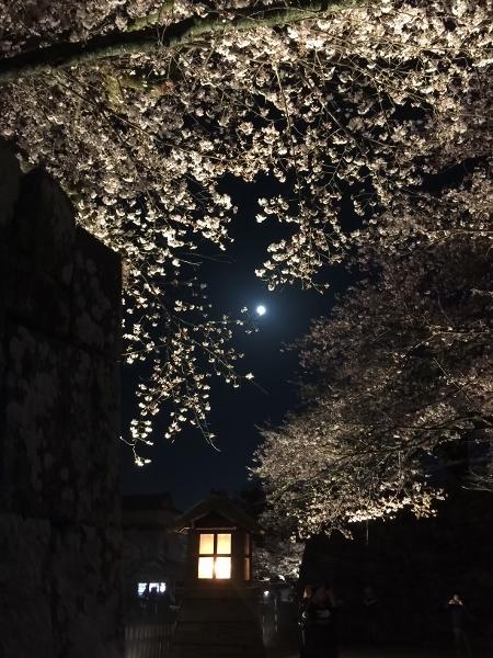 208桜3