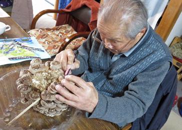 椎茸収穫7