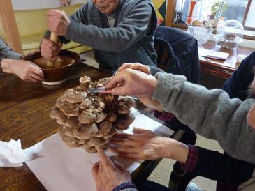 椎茸収穫3
