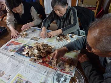 椎茸収穫5