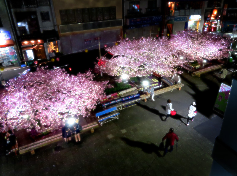 180303,三浦河津桜ライトアップ1