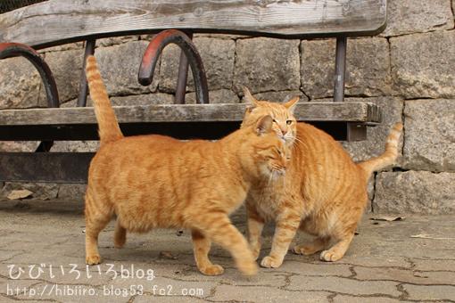 祝☆猫の日