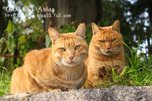 猫写2018(017)
