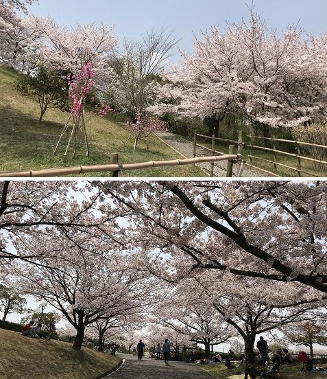 220180401さぬき空港公園 4